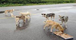 Wild Dogs food