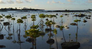 Support Young Reporters for the Environment (YRE) - Mauritius