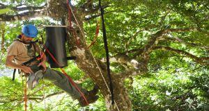 Kestrel and Echo Parakeet nest boxes