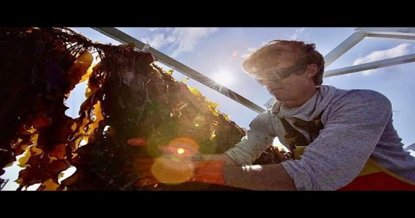 Seaweed farming: an economic and sustainable opportunity for Europe